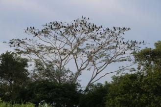 Viele Vögel