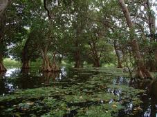 Kayak-Tour durch den Sumpf